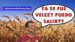 Universitario: memes tras la derrota frente a Vélez Sarsfield en la Copa Libertadores - Noticias de macarena vélez